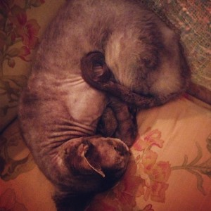 Cairo_Sleeping